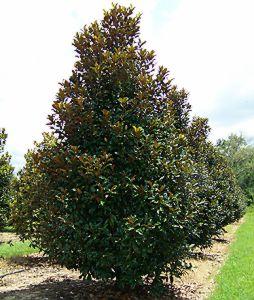 claudia-magnolia-sts.jpg